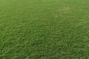 草坪句容草坪基地草坪价格最便宜质量好