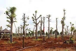 一年四季,树木的正确移栽