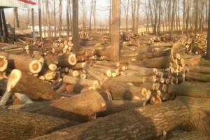 杨木木材加工厂杨木木方厂杨木木板厂