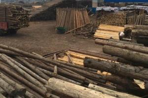 四川柳杉绿化杆各种规格,优价批发