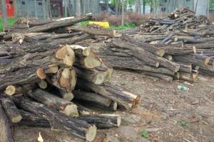 新鲜出炉的槐树原木供应视频