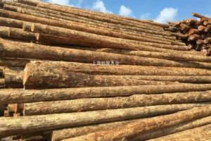 新西兰周边港口的原木价格平均下降了7新西兰元
