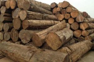 近日缅甸近900吨走私木材被查,29人被抓!