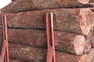 大量供应赞比亚血檀原木