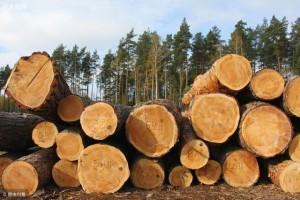 木材种类科普
