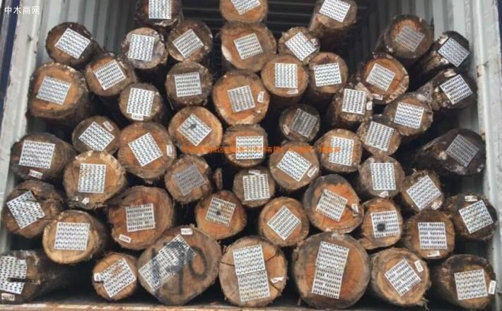 求购:巴西桉木原木