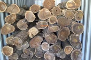黄金檀原木供应