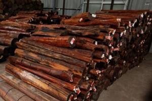 世界名贵木材——蛇纹木介绍