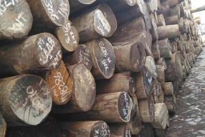 所罗门大叶紫檀进口原木高清图片欣赏