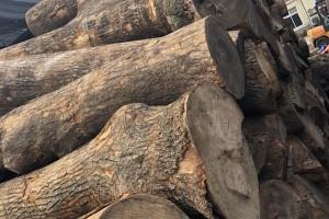 香樟木原木批发价格
