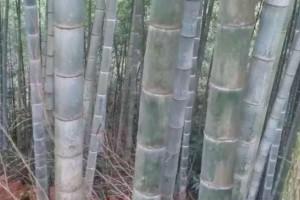 """国家林草局专家为婺城竹产业""""把脉"""""""