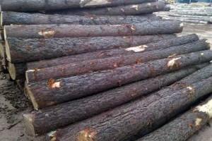 巴西南方松原木直径20cm+