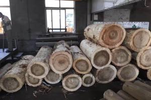 欧洲比利时白杨木原木优点