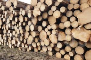 捷克云杉原木长度5.8+10cm,直径20cm+