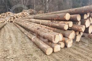 捷克云杉长度11.5m+30cm
