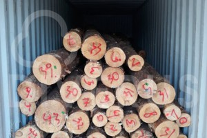 松木原木长度3.8m+10cm,直径20cm+