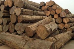 藏在缅北密支那小村庄的上百吨走私木材被查