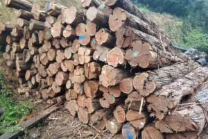 澳洲酸枝原木厂家直供