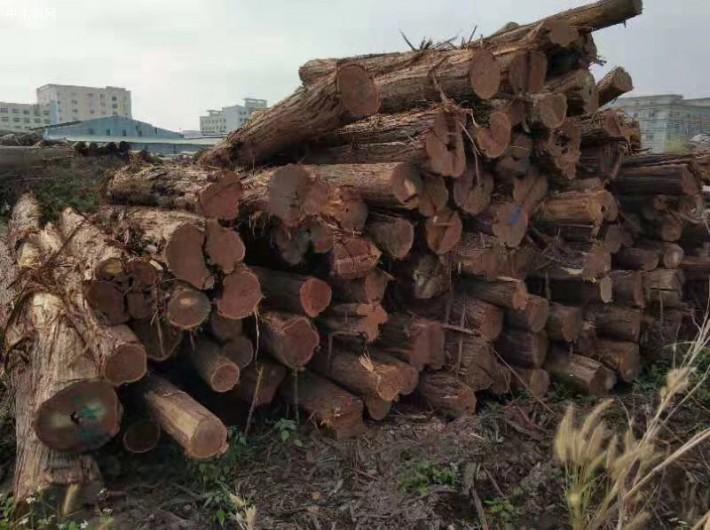 澳洲酸枝原木厂家