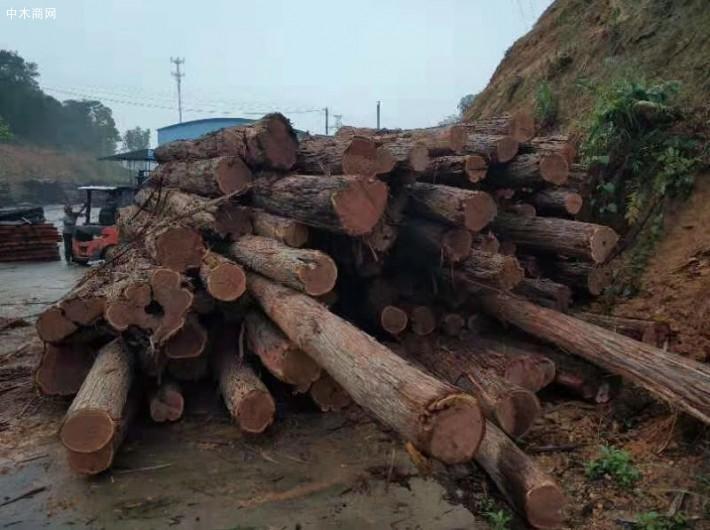 澳洲酸枝原木厂家价格