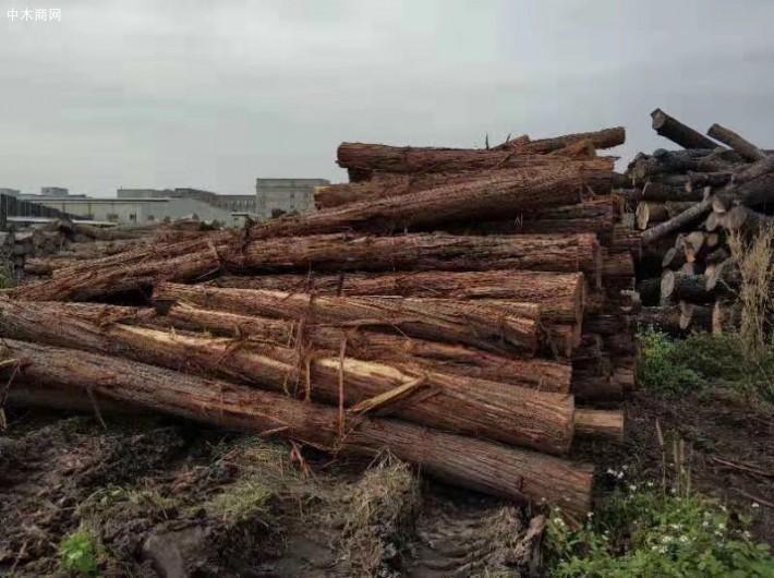 澳洲酸枝原木厂家图片