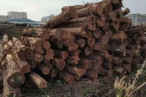 澳洲酸枝原木实物图片