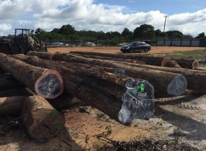 南美铁木豆大规模补仓可能性低