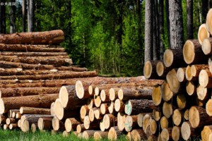 湖南省部署松材线虫病疫木检疫执法专项行动工作