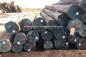广东顺德木材市场进口原木价格行情_2019年05月18日