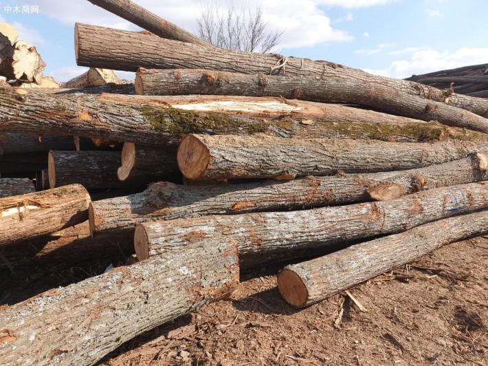 罗马里亚椴木原木图片