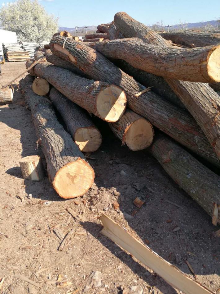 罗马里亚椴木品牌