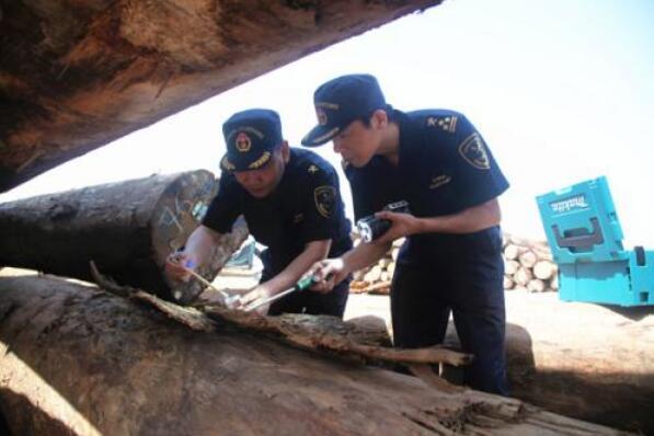 成都海关从进口木材中查获有害生物