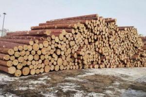俄向青白江国际木材交易中心出口木材总量超过35%