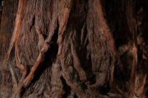 红木一般是什么颜色