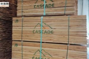 供应各等级规格的美国赤杨木板材价格