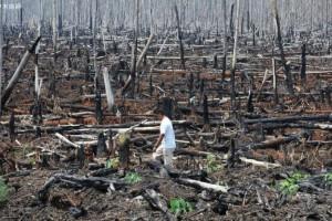 意大利被毁坏的森林有望恢复