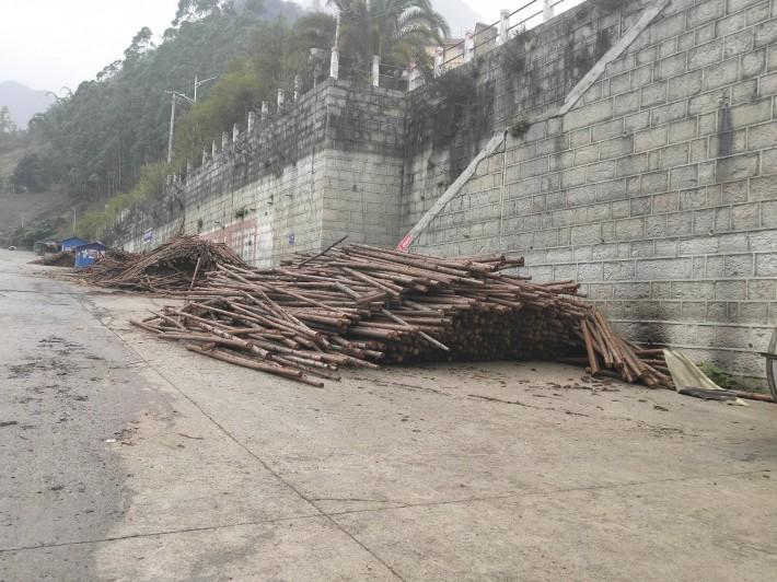 杉木绿化杆