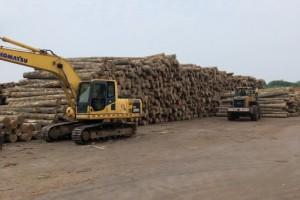 进口铁杉原木板材厂家直销