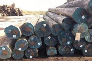 加蓬经济特区每年可处理约200万立方米的原木「进口原木」