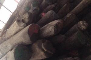 马达加斯加大叶紫檀原木批发