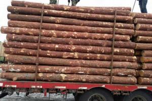绥芬河中俄木材交易中心签约企业入驻仪式盛大召开