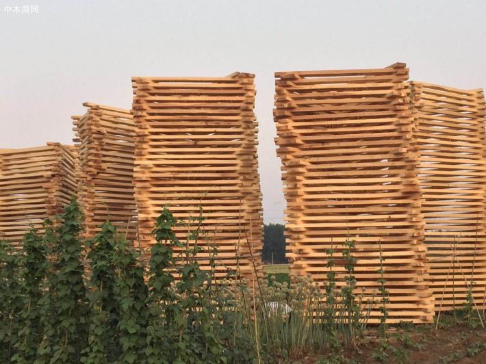 建淼木业白杨木烘干板材厂家直销