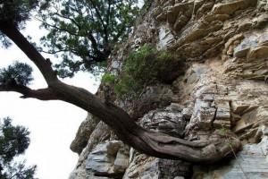 沉香树知识大全,沉香树如何防虫?