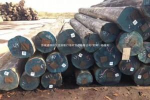 靖江木材产业加快高质量发展