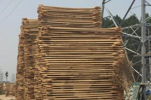 白杨木烘干板生产厂家