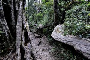 哥伦比亚、玻利维亚和秘鲁等南美地区原始森林损毁率上升