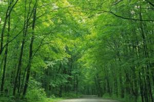 中国拟修改森林法促进森林资源可持续利用和发展