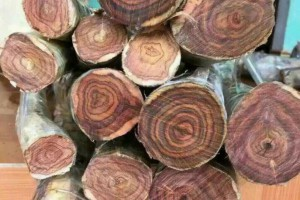 越南把木业发展成为国家先导产业