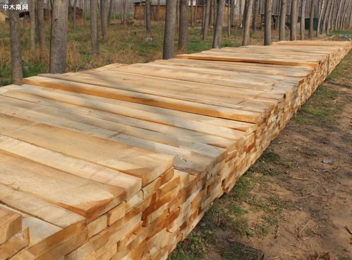 河南白杨木烘干板材与其他木材相对比