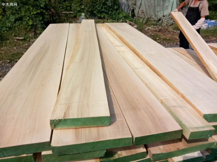 白杨木锯材/湿板经整形
